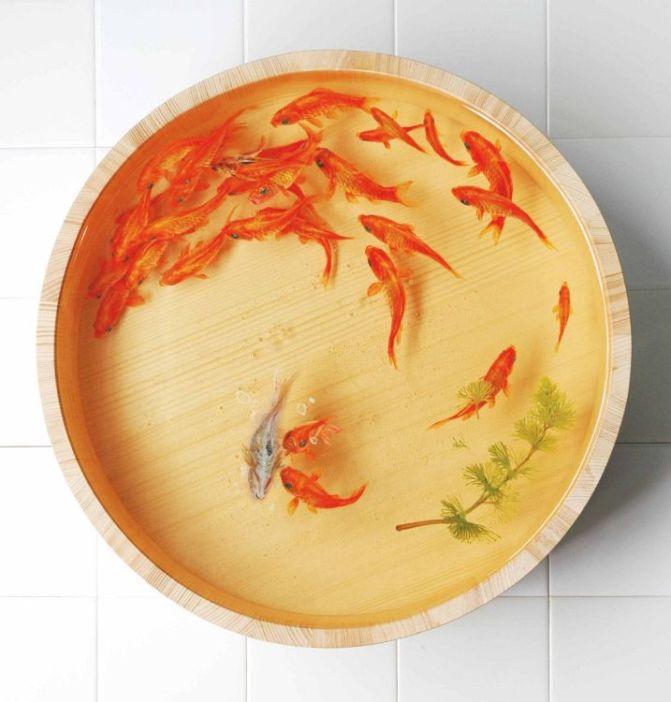 Riusuke Fukahori 深堀隆介 – Goldfish Salvation